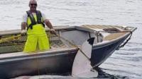 Hiu Putih 4,6 Meter Ditemukan Mati di Pantai Sydney Australia