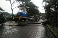 Pengendara Motor Hindari Lewati Pohon Besar saat Hujan & Angin Kencang