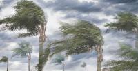 Minimarket Ambruk Ditimpa Pohon Tumbang di Kebon Kacang