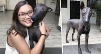 Mirip Patung Pahatan, Seekor Anjing Jenis Langka Jadi Viral di Media Sosial