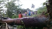 Angin Kencang, Pohon-Pohon Bertumbangan Tutup Jalan di Ungaran Semarang
