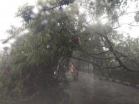 Diguyur Hujan Deras, Pohon di Kebon Jeruk Tumbang