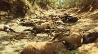 Puluhan Kuda dan Hewan Liar di Australia Mati Akibat Suhu Ekstrem
