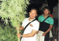 Bagaimana Bisa Pohon Ganja Bisa Tumbuh Subur di Purwakarta?