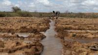 Somalia Dilanda Kekeringan, 725.000 Orang Terancam Kelaparan