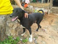 Seekor Anjing Jadi Pahlawan karena Menyelamatkan Bayi yang Dikubur Ibu Kandung