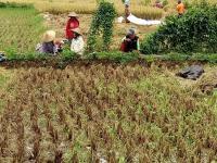 Kementan Minta Daerah Memvalidasi Data Luas Lahan Pertanian