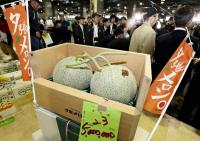 Dua Melon Premium di Jepang Terjual dengan Harga Fantastis Rp655 Juta