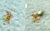 Viral Wisatawan Pantai Jono Buang Makanan Seharga Rp285 Ribu
