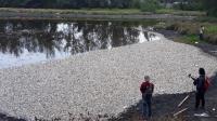 Puluhan Ribu Ikan Nila Mati di Kulonprogo Disebabkan Keracunan Amoniak