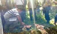 Bayi Terbungkus Seragam Sekolah SMP Ditemukan di Kebun Sawit