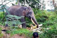 4 Gajah Liar Berhasil Digiring Keluar dari Permukiman Warga