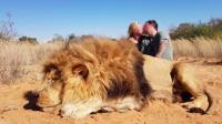 Berfoto Ciuman Bersama Bangkai Singa Buruan, Pasangan Kanada Buat Marah Warganet
