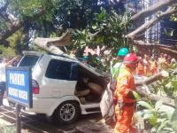 Pihak Universitas Pancasila Sebut Ada Angin Puting Beliung Sebelum Pohon Tumbang