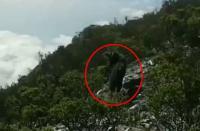 Viral Kambing Hutan Sumatera Terlihat di Gunung Dempo