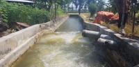 Program Pompanisasi Sungai Bengawan Solo Jadi Berkah Petani Tuban