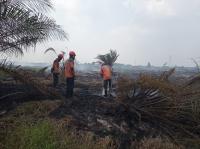 Anies Kirim Bantuan, BPBD Riau: Kami Punya Personel Cukup Atasi Karhutla