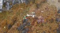 Bangkai Pesawat Twin Otter PK-CDC Ditemukan, Operasi SAR Diperpanjang