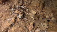 Ratusan Tulang Belulang Tentara Jepang di Raja Ampat Raib Dicuri