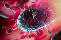 Pembunuh Bakteri yang Kebal Antibiotik Berhasil Ditemukan