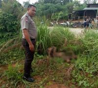 Pengusaha di Pekanbaru Jadi Korban Pembunuhan, Mobil Terbakar