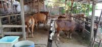 Curhat Pedagang Hewan Kurban, Penjualan Turun 50 persen