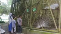 Setelah 4 Bulan Tutup, Kebun Binatang Taman Rimbo Kembali Dibuka