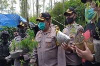 Polisi Ungkap 1 Hektare Ladang Ganja di Lembang Bandung, Sekali Panen 40 Kg