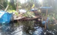 Perambahan Hutan Marak di Kabupaten Siak Riau