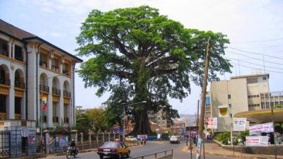 Pohon Berusia 500 Tahun Jadi Ikon Sierra Leone