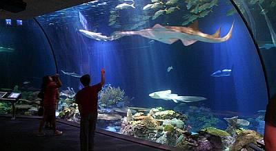 Ancol Nilai Sea World Hanya Sepihak