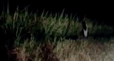 Sosok Hantu Anak Kecil Berambut Panjang Tidak Sengaja Terekam Kamera, Videonya Bikin Geger!