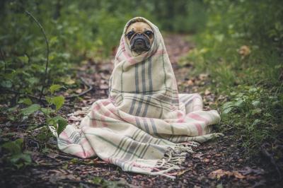 7 Tips Merawat Anjing Kesayangan Anda di Musim Hujan