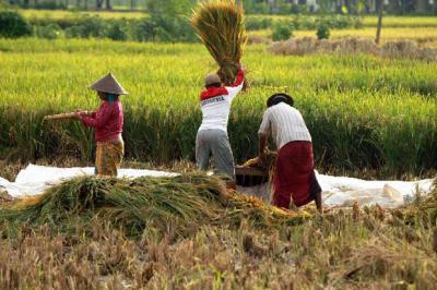 Strategi Menteri Rini agar Produk Petani RI Punya Daya Saing