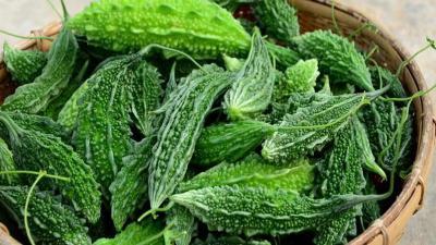 Sederet Manfaat Sehat Konsumsi Makanan Pahit