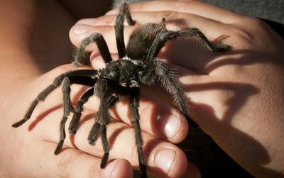 Nonton Spider-Man dan Ant-Man Bisa Hilangkan Fobia Serangga Loh!