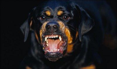 Viral Tips Sesat Lawan Anjing Terlatih di Demo 22 Mei