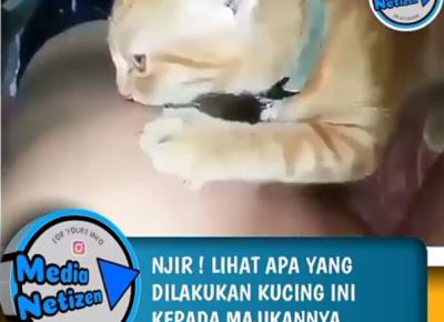 Video Viral Seorang Pria yang Diperkosa Kucing Beredar