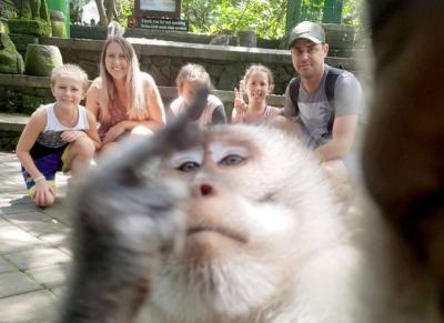 Selfie Bareng Turis, Monyet Bali Ini Acungkan Jari Tengah