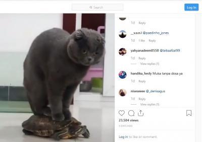 Kucing Hitam Naik Kura-Kura, Netizen: Turun Lu Gendut!