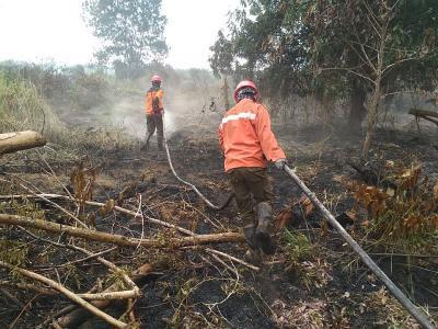 100 Orang Lebih Jadi Tersangka Kebakaran Hutan Sumatera dan Kalimantan