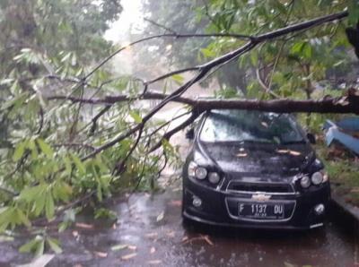 Bogor Hujan Angin, 18 Rumah Rusak Parah & Pohon Tumbang