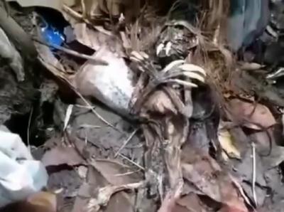 Viral Penemuan Benda Mirip Jenglot di Jakarta Selatan