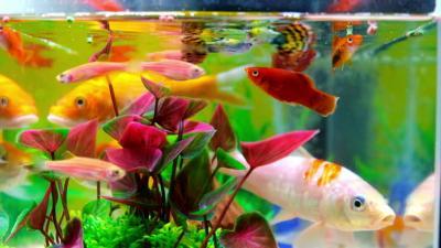 Unik, Dokter Temukan Ikan Hidup dalam Hidung Anak Kecil