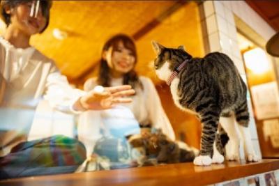 Sensasi Menginap di Hotel Kapsul Sambil Lihat Kucing Lucu Bermain