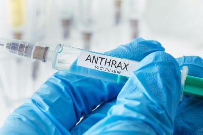 Wasapadai Penyebaran Antraks, Klaten Tambah Stok Vaksin