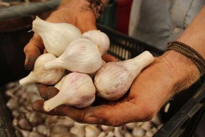 Makan Bawang Putih Banyak-Banyak Tak Akan Lindungi Diri Anda dari Corona