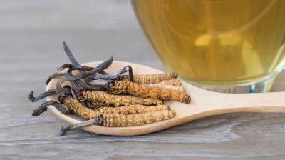 Lindungi Tubuh dari Covid-19, Amankah Makan Jamur Cordyceps Secara Langsung?