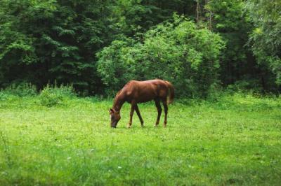 Apa Hukum Memakan Daging Kuda?