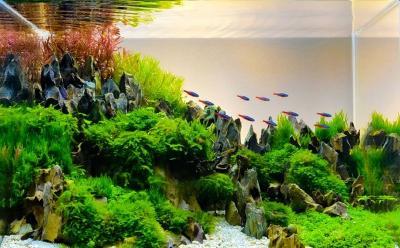 5 Ikan yang Cocok Dipelihara dalam Aquascape